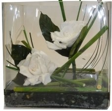 Preserved Gardenia white arrangement in glass vase