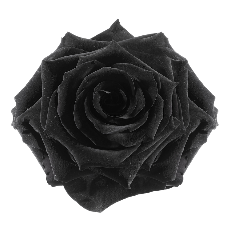 preserved rose: black-night
