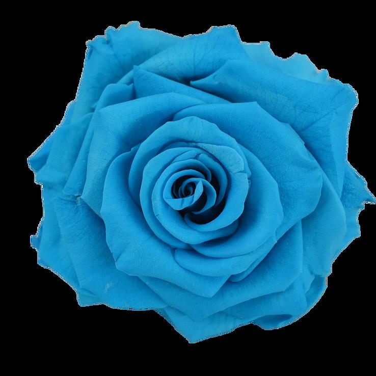 preserved rose light blue