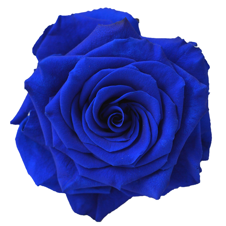 Preserved Rose Navy Blue