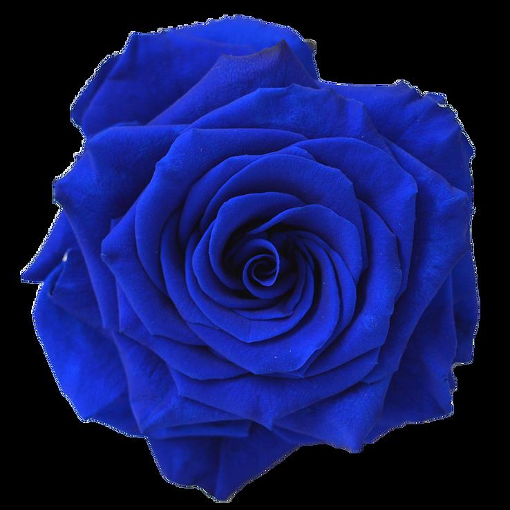 Preserved Rose Navy Blue