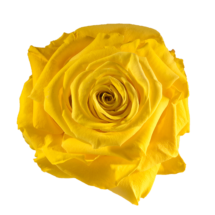 Preserved Rose Yellow